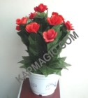 Automatic Rose Flower- Remote Control<img border=&quot;0&quot; src=&quot;http://kapmagic.com/products_pictures/FREEshippingw5w.gif&quot; width=&quot;175&quot; height=&quot;50&quot;></p>
