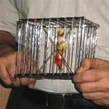 CANE TO BIRD CAGE <img border=&quot;0&quot; src=&quot;http://kapmagic.com/products_pictures/FREEshippingw6w.gif&quot; width=&quot;175&quot; height=&quot;50&quot;></p>